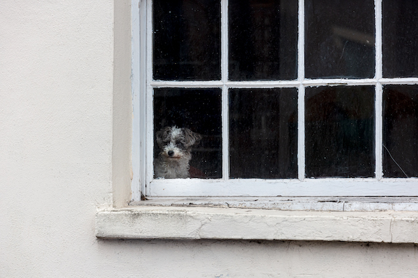 Isolated dog in a window