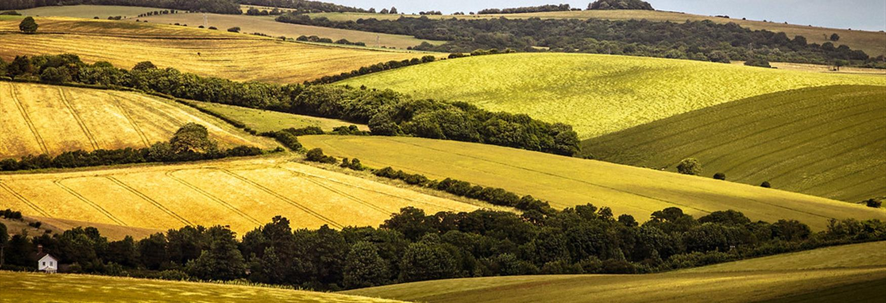 South Downs National Park - Nigel French